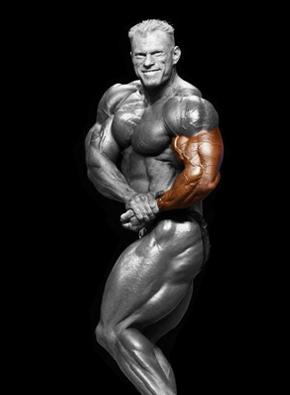 Rankų raumenys
