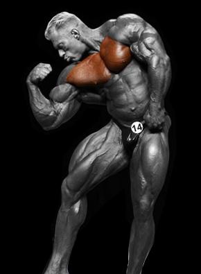 Krūtinės raumenys