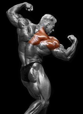 Pečių raumenys